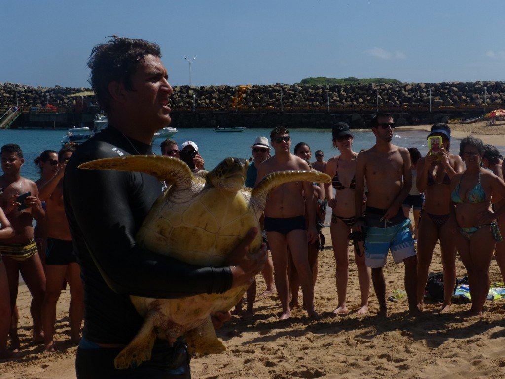 Captura das tartarugas | Projeto Tamar